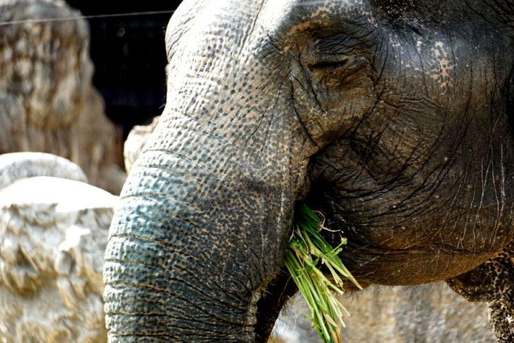 象 Zoo