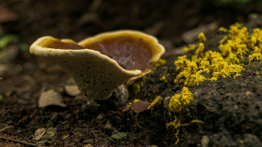 Yellow world of mushrooms Macro Photography Nature Nature Photography Rainy Days Beauty In Nature Close-up Day Forest Ground Fragility Freshness Fungus Growth Macro Mushroom Nature No People Outdoors Soil Toadstool Yellow The Still Life Photographer - 2018 EyeEm Awards