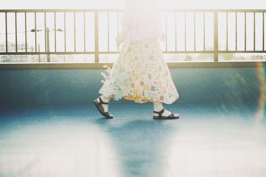 Film Film Photography Filmphotography Filmisnotdead Filmcamera 35mm Film Pentax Super-a Fujifilm Light And Shadow Sunlight Lensflare Japan フィルム フィルム写真 レンズフレア