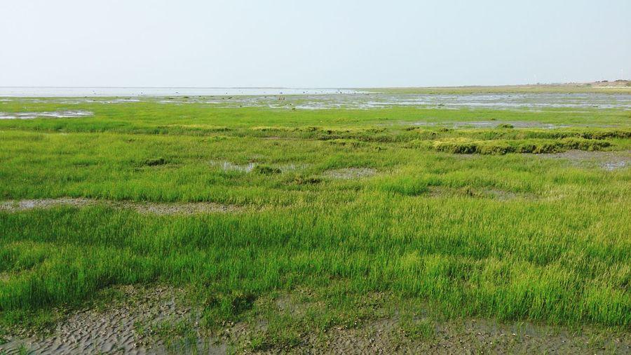 Sea Rural Scene Beach Water Algae Sky Grass Landscape Green Color Grass Area