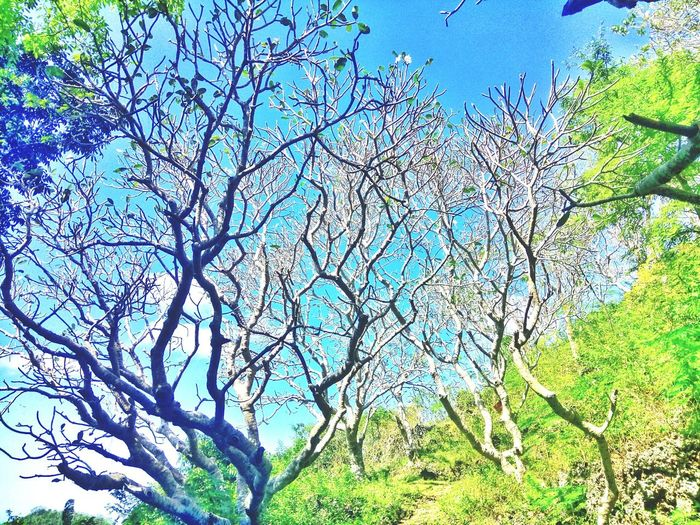 Let every twigs be a form of art 💞 Beauty In Nature Green Green Green!  Mountain Eyeem Philippines EyeEm Best Shots - Nature EyeEm Nature Lover EyeEm Gallery EyeEm Selects Beauty In Nature Enjoying The View Scenics EyeEmNewHere Wilme'sTravelDiaries Nature Life Nature Photography