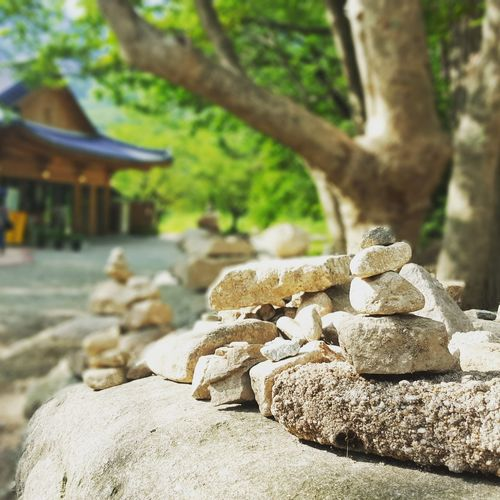 Korea Tree Nature No People Outdoors Close-up Beauty In Nature Day Wishingstone Outdoor Pursuit Serene