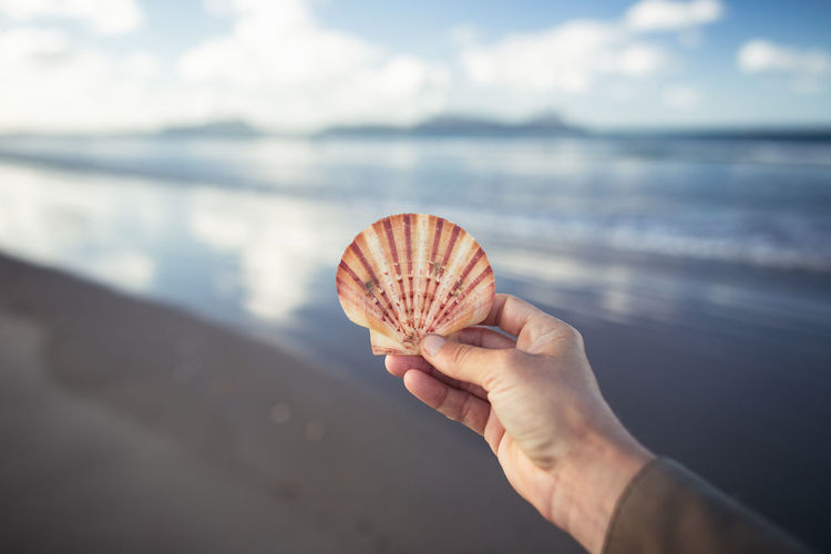 Close-up of hand holding shell over sea