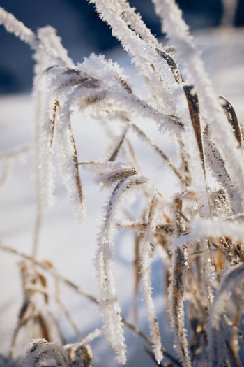 Frozen Grass Franconia Bavaria Frosty Nature Nature Photography Naturelovers Calmness Tranquility Beauty In Nature Frozen Grass Grass Frozen Frozen Nature Winter Winter Morning Snow Cold Temperature Winter Backgrounds Frozen Close-up Frost Ice Crystal Weather Condition