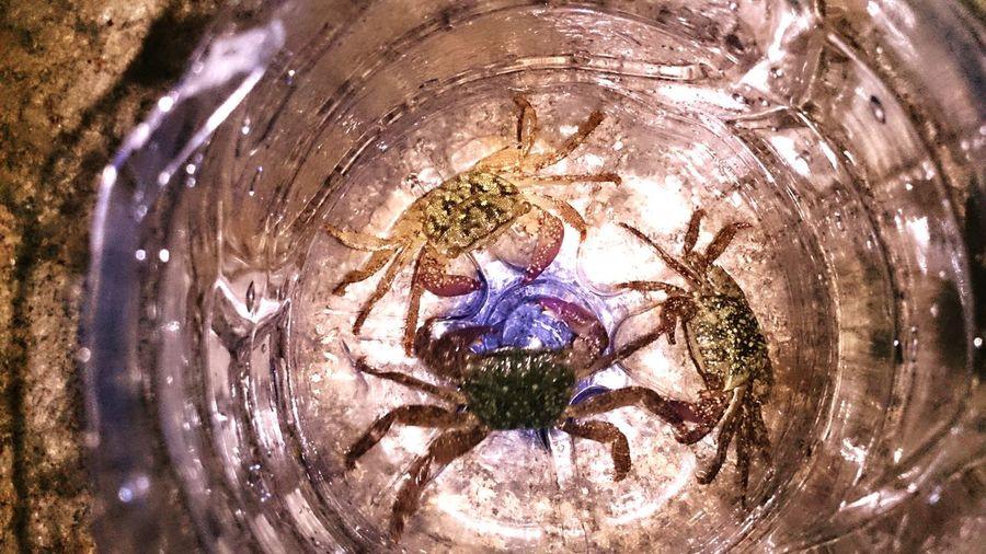Mr.Crab that i've got lastnight...hahaha Xperiaz Sony Siringbeach Fishing First Eyeem Photo