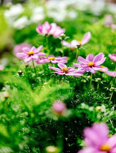 Wild Flowers EyeEm Best Shots First Eyeem Photo Hello World EyeEm Selects Flower Flowering Plant Plant Freshness Fragility Vulnerability  Growth Beauty In Nature Pink Color Nature Flower Head Close-up Inflorescence Green Color Selective Focus Day No People Outdoors