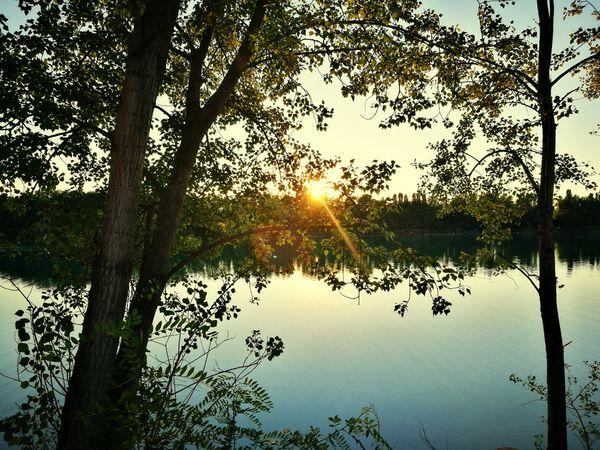 Tree Water Bird Lake Reflection Sky