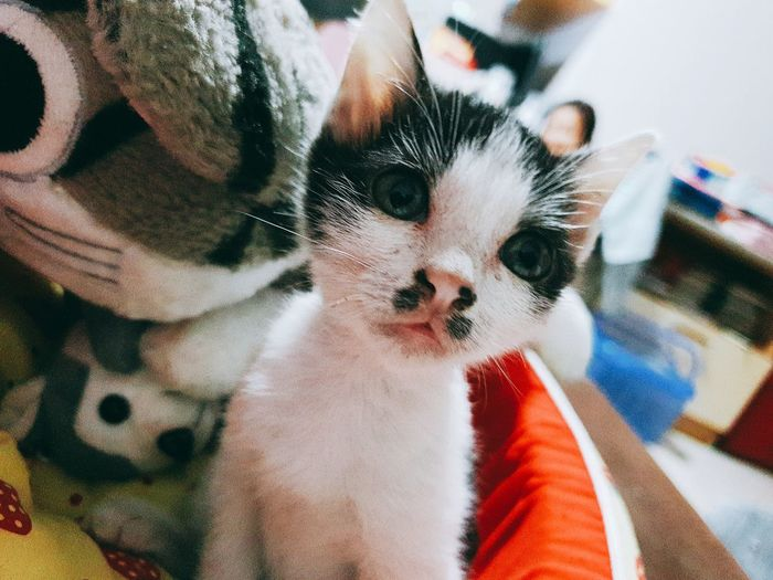 Pets Portrait Close-up Cat Kitten At Home Sleepy Pet Bed Stray Animal Domestic Cat Whisker Home