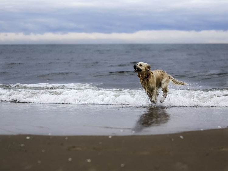 Animal Themes Beach Beauty In Nature Day Dog Domestic Animals Mammal Nature No People One Animal Outdoors Pets Scenics Sea Sky Water