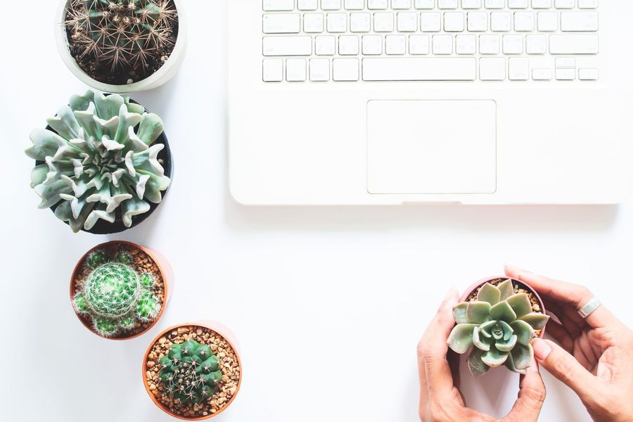 White laptop computer with cactus and succulent plants and human hand, Earth Day concept Cactus Composition Day Directly Above Earthday Garden Green Greenery High Angle View Holding Human Body Part Human Hand Indoors  Internet Love Nature People Plant Plant Succulents White