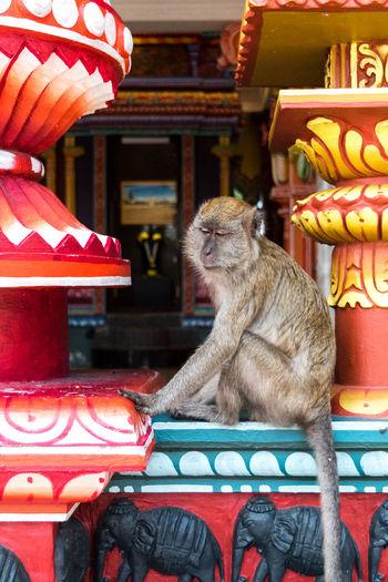 Monkey sitting in a store