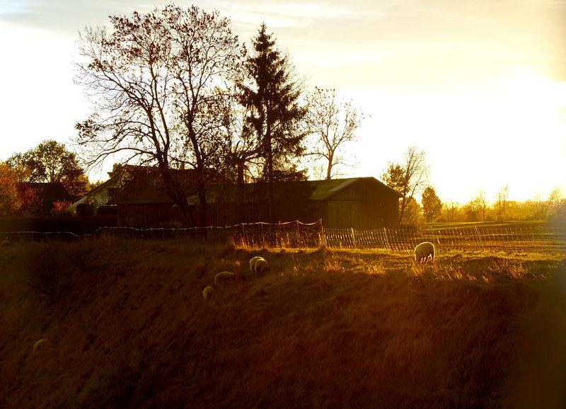 Sky Tree Landscape Architecture Domestic Animals Livestock Rural Scene Herbivorous Animal Themes Domestic Nature Mammal Sunlight Schongau Onmywayhome