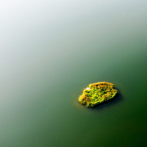 Minimalist Island Ecology Eco Island Minimalism Minimal Minimalist Sea Lake Water Backgrounds Background Aerialphotography Aerial Mavic2pro Lietuva Beautifullithuania Lithuania Green Water UnderSea Sea Close-up Green Color Sea Life
