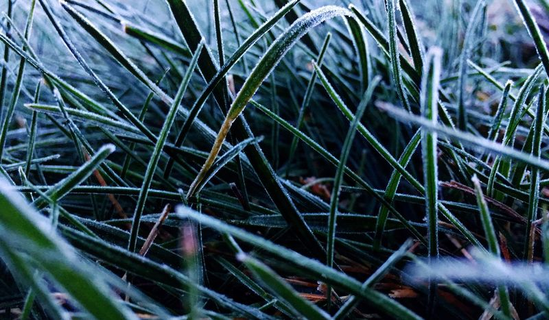 Plant Growth No People Day Nature Green Color Close-up Grass Beauty In Nature Tranquility Outdoors Field Land EyeEmNewHere The Traveler - 2018 EyeEm Awards The Great Outdoors - 2018 EyeEm Awards Autumn Mood