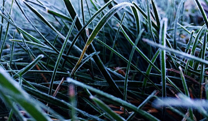 Plant Growth No People Day Nature Green Color Close-up Grass Beauty In Nature Tranquility Outdoors Field Land EyeEmNewHere The Traveler - 2018 EyeEm Awards The Great Outdoors - 2018 EyeEm Awards
