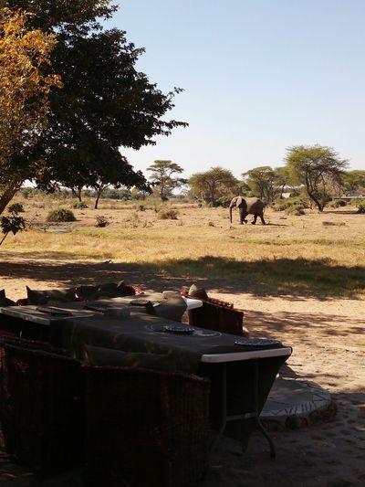 Animal Wildlife Animals In The Wild Nature Travel Destinations Safari Animals BOTSWANA Chobe Senyatisafaricamp