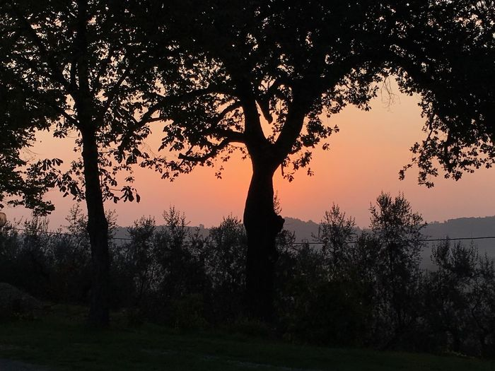 Morning emotion Starting Day New Day Rising Silhouette Tree Sunlight Emotion Photography