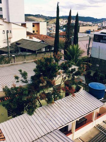 Pinheiro Prédio  Natureza 🐦🌳 Popular Photos Nublado Dia Nublado Nubladon NaturezaMaravilhosa Alturas Arvores... 🌿❤ árvore Morta Natureza Urbana Urbano