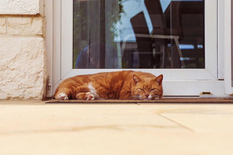 Cat resting on tiled floor