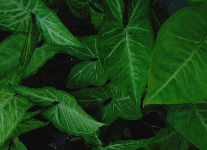 Green plant on full frame