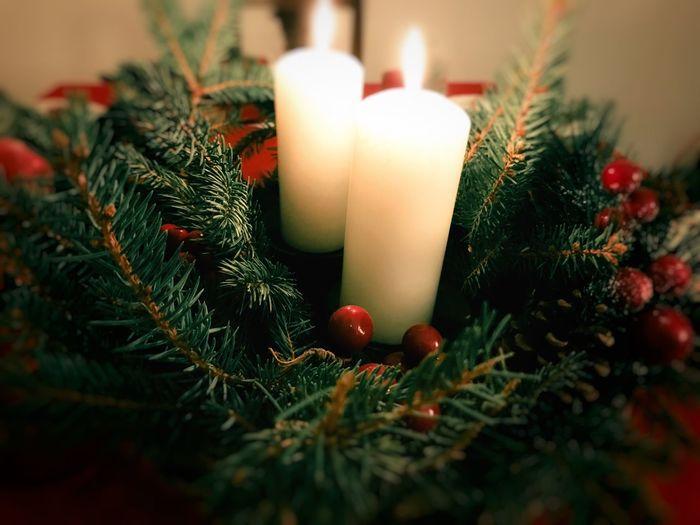 Christmas Lights .. Christmas Christmas Tree Celebration Christmas Decoration Decoration Tradition Christmas Ornament