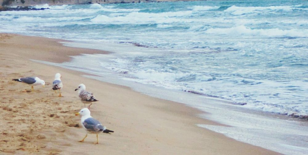 Good Morning 🐦🌊 Sea Beach Seagulls And Sea Seagull Nature Taking Photos Blue Water Waves Colorful From My Point Of View One The Way Fine Art Photography Feel The Journey EyeEm Nature Lover Fine Art