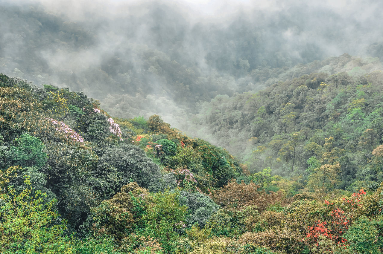 nature, mountain, scenics, beauty in nature, tranquil scene, day, tree, tranquility, fog, high angle view, outdoors, landscape, no people, forest, green color, growth, plant, mountain range, sky