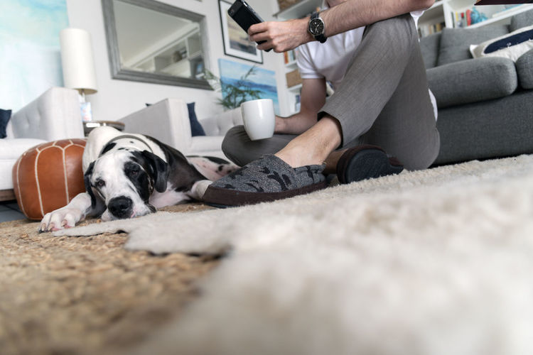 Man sitting on floor with dog drinking coffee and using smart phone. Coffee Slippers Adult Canine Casual Clothing Dog Domestic Domestic Animals Domestic Room Furniture Indoors  Lifestyles Luxury Mammal One Animal One Person Pet Owner Pets Real People Relaxation Selective Focus Technology