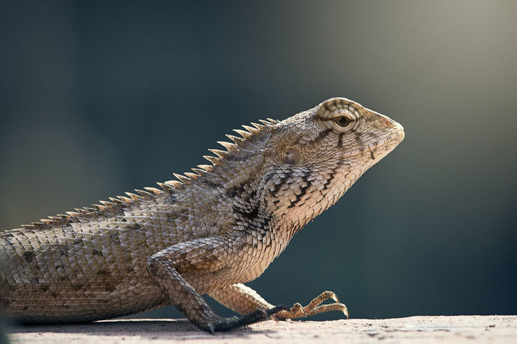 Close-up of lizard on surface