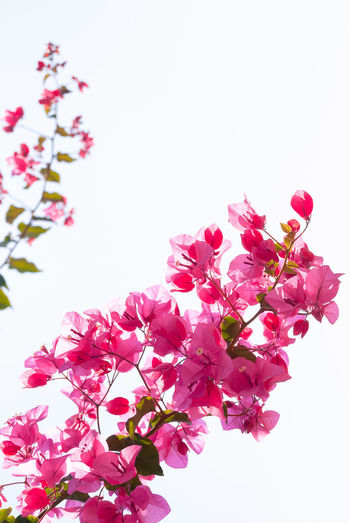 Flowering branch with beautiful blossom Nikon Beauty In Nature Blossom Blossoms  Branch Close-up Flower Flower Head Flowering Plant Fragility Freshness Inflorescence Low Angle View Nature No People Outdoors Photography Pink Color Plant Sky Spring Springtime Still Life Tree Vulnerability