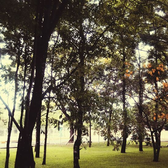 An afternoon in the University📚 Tree Growth Nature Field Outdoors Tranquility Beauty In Nature Day Tree Trunk Branch No People Landscape Grass Flowers Scenics Sky Freshness