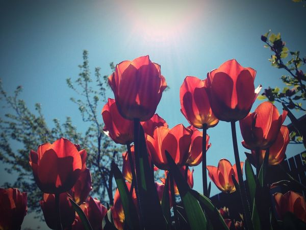 Soaking up the sun! Hello World Flowers Flowerporn Soaking Up The Sun EyeEm Nature Lover
