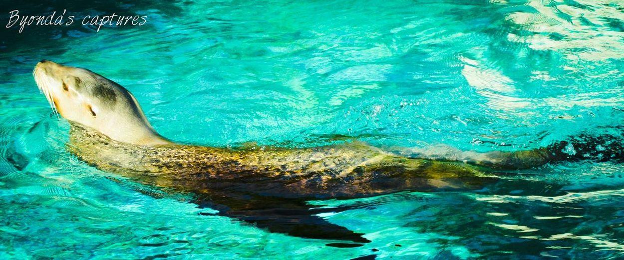 Animals Byondascaptures Photography Artis  Amsterdam Www.facebook.com/byondascaptures