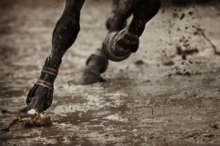 Cropped Image Of Horse Running On Wet Field During Rainy Season