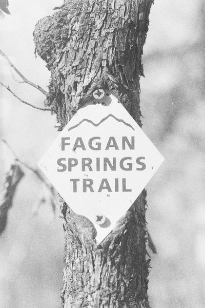35mm Film Black And White Photography Caffenol Fagan Spring Film Nature Trail Marker Tree