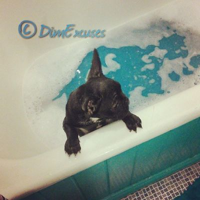 Bath time. AdventuresOfMolly Frenchbulldog Puppy