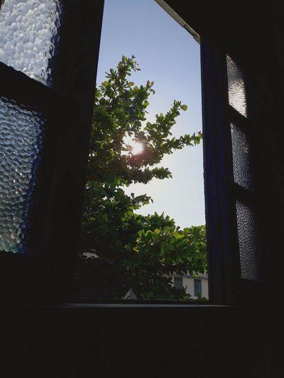 FAETEC Tree Window Close-up Sky
