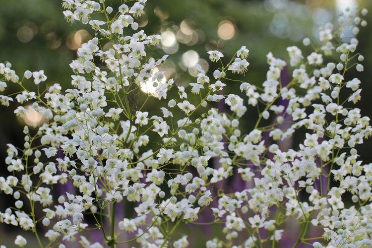 Flowers in June Blake's Garden, Ireland. Nature Flower Beauty In Nature Outdoors Ireland 🍀 Gardening Garden Photography Juneblake