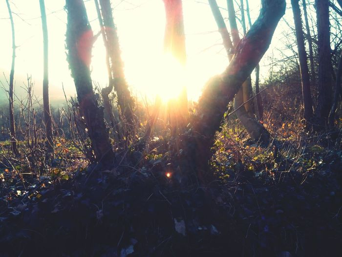 Paesaggio Sole Alberi