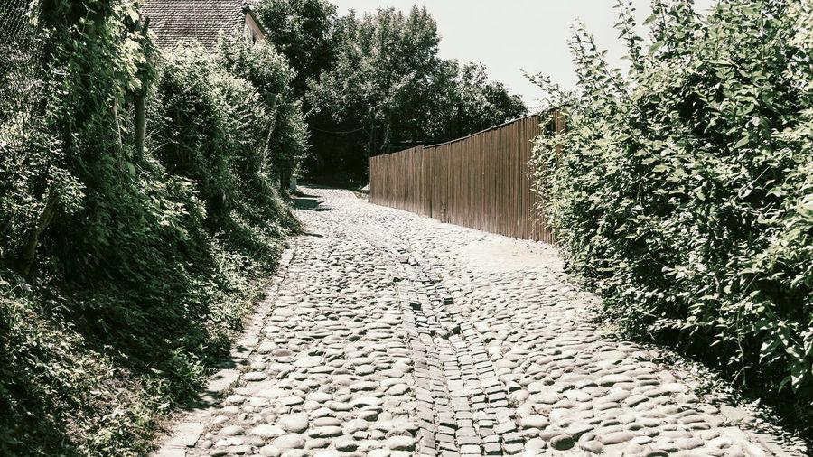 Footpath amidst plants against wall
