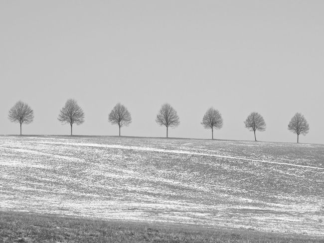 Beauty In Nature Black And White Clear Sky Day EyeEm Nature Lover Landscape Minimal Minimalism Minimalobsession Monochrome Nature No People Outdoors Rural Scene Sky Snow Covered Tranquil Scene Tranquility Tree Winter Trees Wintertime Simplicity In A Row Blackandwhite On The Way