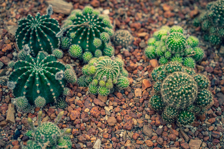 High angle view of cactus on field