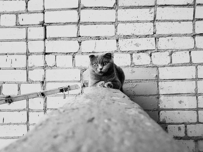 Portrait of cat against wall