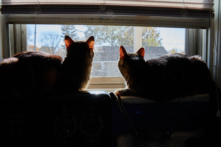 Cats relaxing on window sill at home