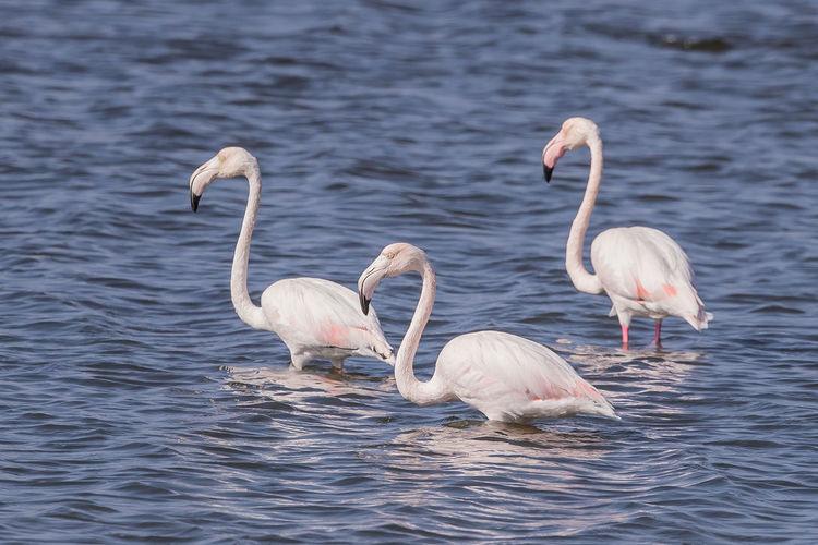 Flamingos perching on lake
