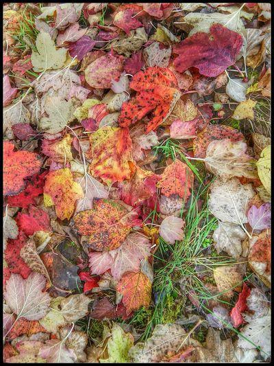 Autumn Leafs Of Fall Herbst In Seinen Schönsten Farben Autumn Colors
