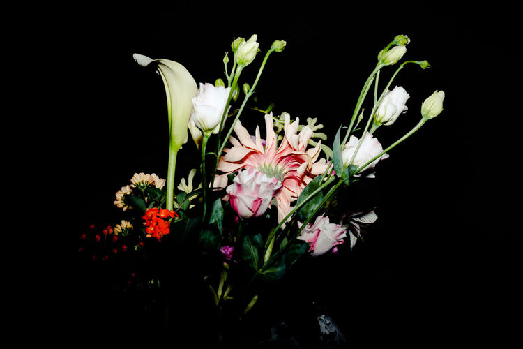 Beauty In Nature Black Background Close-up Flower Flower Head Fragility Freshness Growth Nature Night No People Outdoors Petal Pink Color