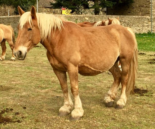 Horse Domestic Animals Animal Themes Mammal Field Livestock Grass One Animal Day Outdoors Standing No People Nature
