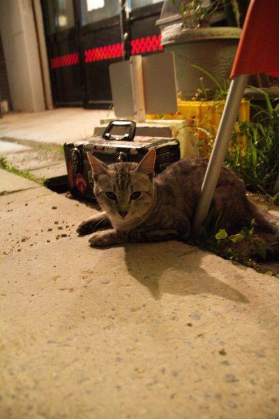 日本 Japan スナップ Snap ねこ Cat Okinawa 沖縄 猫 ライブハウス ねこ 那覇 LIVEHOUSE Naha City