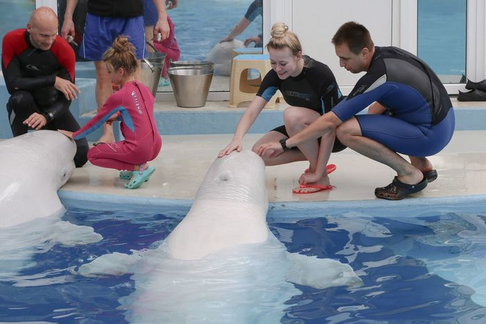 Dolphinarium Sochi White Whale Whale Mary My Daughter